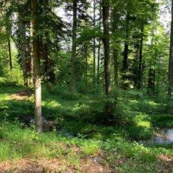 Wander- und Bikelandschaft im Tannzapfenland